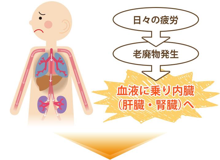 日常の疲労が内臓に溜まる